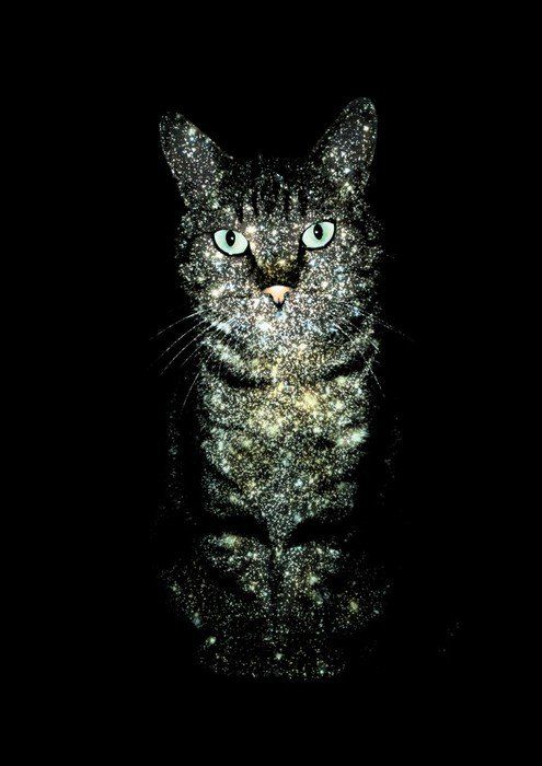 Galactic cat. I want this on a shirt!!