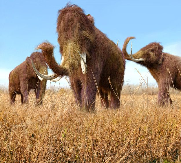 When the last mammoth finally died, the Great Pyramids were already 1,000 years old.