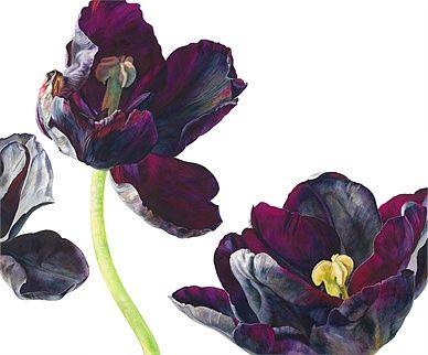 Black tulips illustration by Rosie Sanders