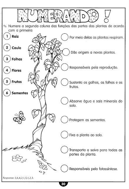 Atividades sobre as plantas ou vegetais: partes, necessidades, as partes da flor, cruzadinhas, polinização, cadeia alimentar... | Aprendendo com a Tia Debora