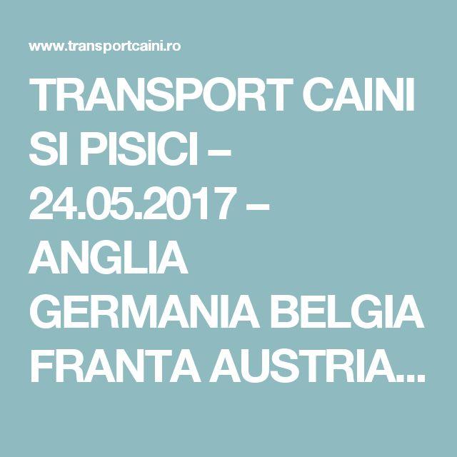 TRANSPORT CAINI SI PISICI – 24.05.2017 – ANGLIA GERMANIA BELGIA FRANTA AUSTRIA UNGARIA - Transport animale de companie caini si pisici in tara si international   transportcaini.ro