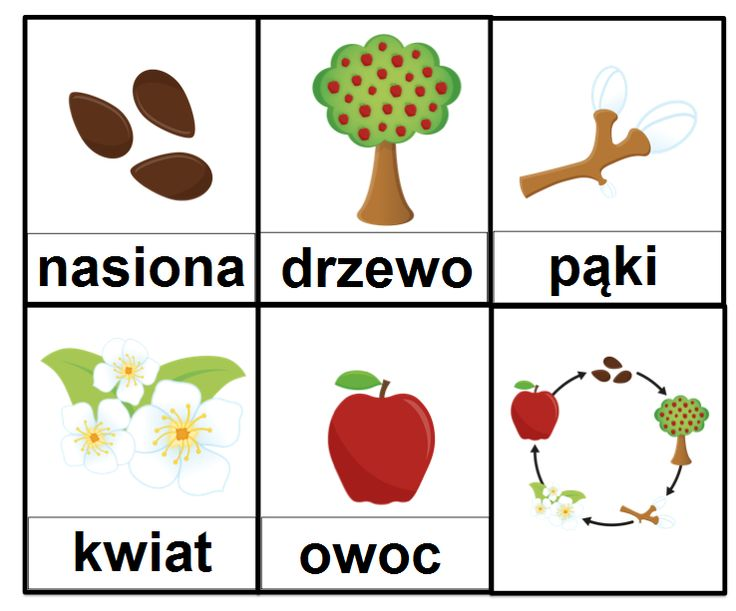A Is For Apple Worksheetfun : Best homeschooling number tracing images on pinterest