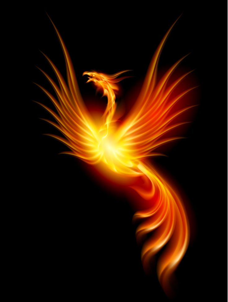 bird fire download more from: https://play.google.com/store/apps/details?id=com.andronicus.coolwallpapers