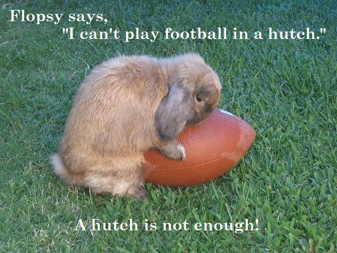 "Flopsy the rabbit LOVES to play football and says ""I cant play football in a hutch"" :o( A hutch is not enough for a bunny."