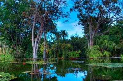 puerto de la cruz - botanical garden