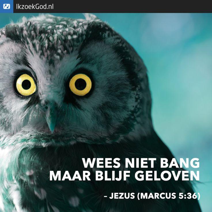 Wees niet bang, maar blijf geloven. (Jezus in Marcus 5 vers 36) #uil #ogen #owl #Jezus #geloof #bang #angst #bijbel
