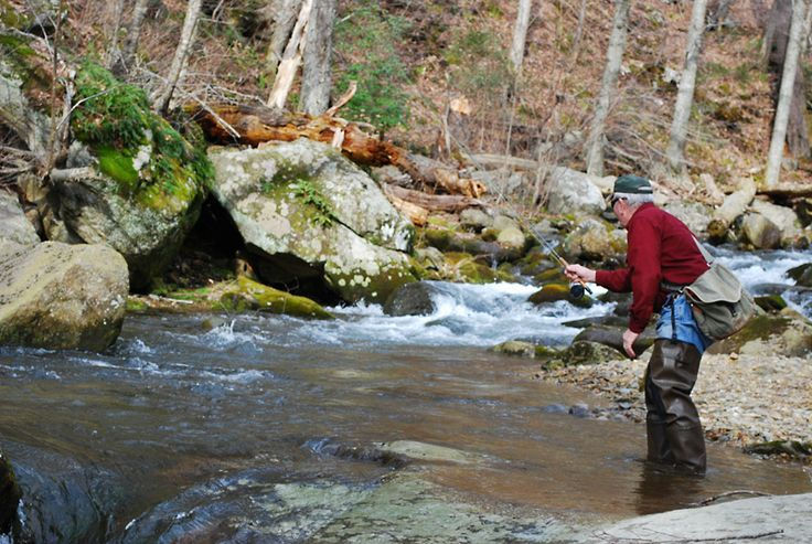 17 best images about trout fly fishing on pinterest for Shenandoah national park fishing
