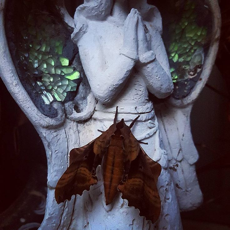 Moth take flight and and spread your magic this night as the Moon wanes down take with you all negativity and fight. The New Moon is near there's no need to fear for the shadows bring with them a magic so clear. So Moth take flight and spread this new magic cast tonight💫🌘 #somoteitbe🦋🖤🌠