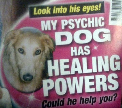 My psychic dog has healing powers: Funny Things, Funny Dogs, Funny Pictures, Psychics Dogs, 37 Things, Weird Break, Take A Break, The World