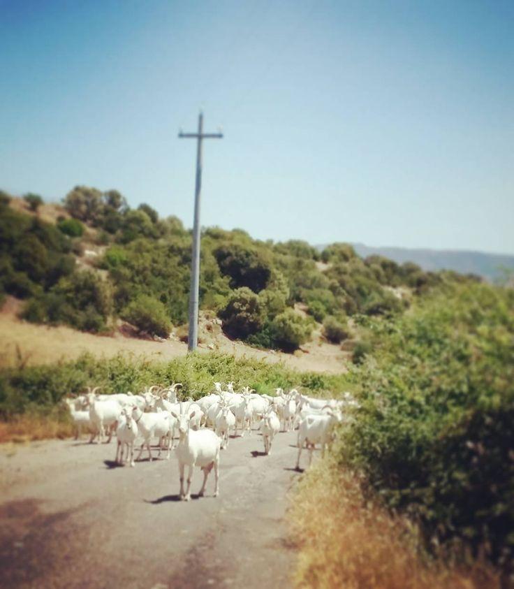 che traffico! #Sardegna
