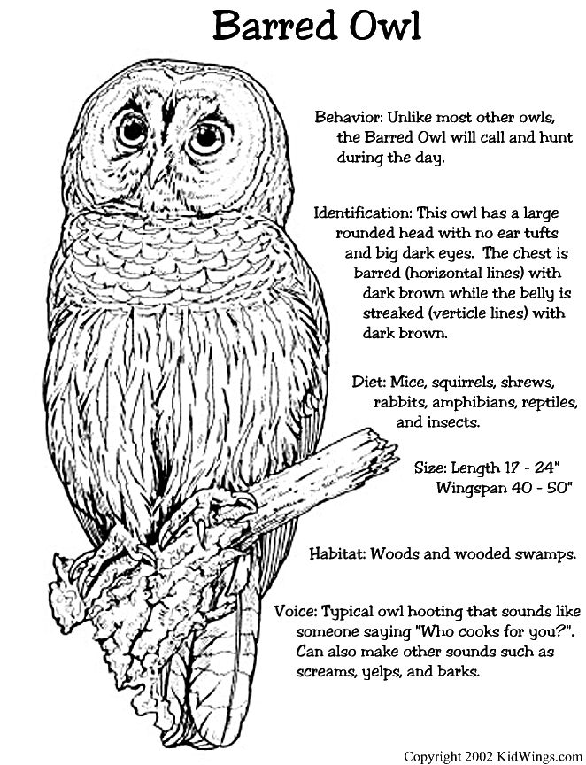 unique coloring pages owl ornate - photo#7