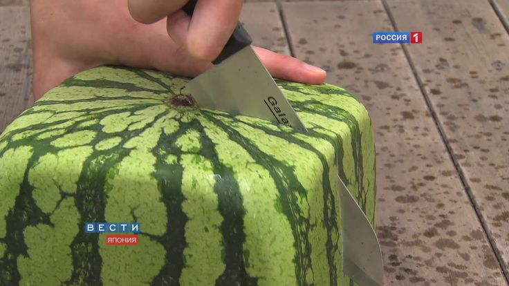 Square Watermelons Grown in Japan as Fruit 'Art'