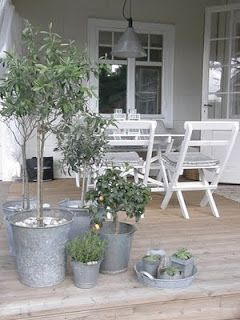 Grey house and galvanized pots-great! Love the zinc pots with olives in them!!