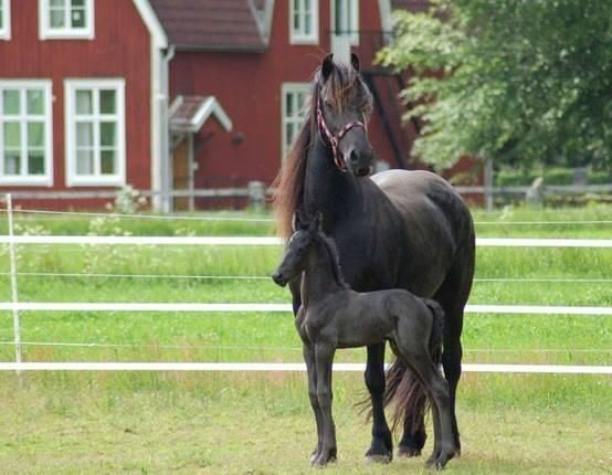 Gorgeous mare & foal