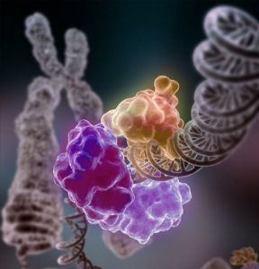 Repair proteins wrapped around a DNA double helix. These proteins prevent DNA damage from accumulating and causing cell death.  (Source: NIGMS, Credit: Tom Ellenberger, Washington University School of Medicine in St. Louis and Dave Gohara, Saint Louis University School of Medicine)