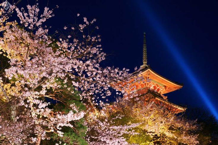 古都・京都の表情豊かな桜