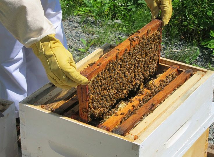 Πρακτική Μελισσοκομία - Ορεινή Μέλισσα: Επιθεώρηση μελισσιού : Οδηγίες και μυστικά για να γίνεται εύκολα και σωστά