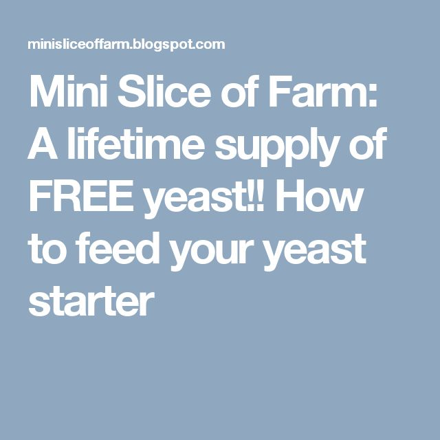 Mini Slice of Farm: A lifetime supply of FREE yeast!!  How to feed your yeast starter