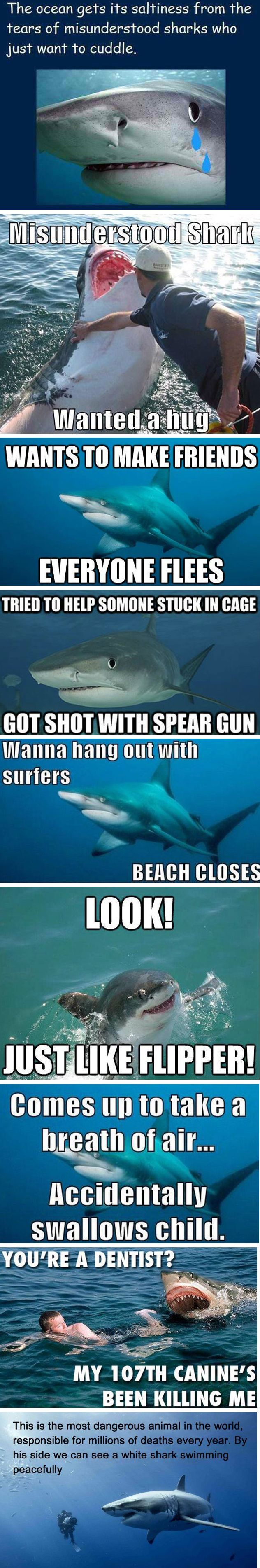 Misunderstood sharks. People kill more sharks per second than sharks kill people per year