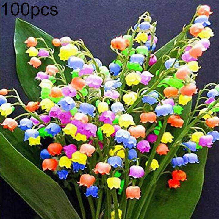 100× Rare Colorful Lily Of Valley Convallaria Majalis