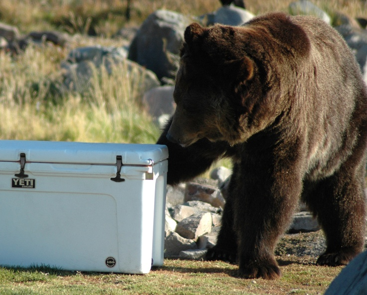 Yeti Coolers Are Certified Bear Proof By The Interagency