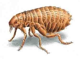Consejos para eliminar pulgas de la ropa de cama... https://www.dulce-hogar.net/blog/consejos-para-eliminar-pulgas-de-la-ropa-de-cama/