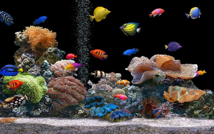Fish Tank with Odd Number of Fishes