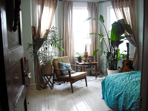 Beautiful wooden floors and house plants