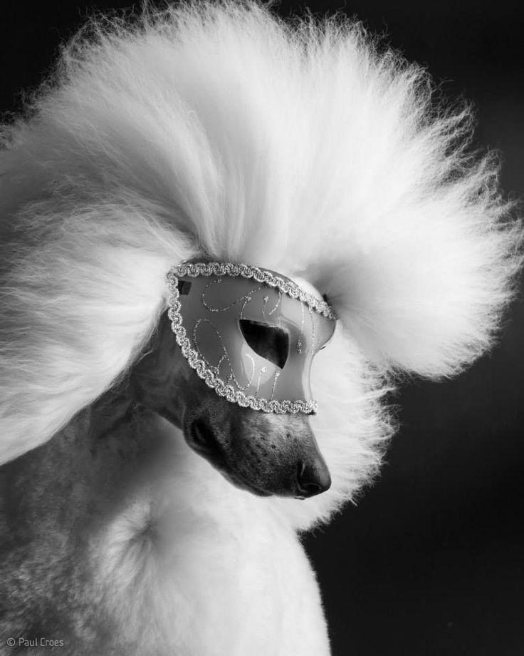 Entrevista com o incrível fotógrafo Paul Croes http://portaldodog.com.br/cachorros/entrevistas/entrevista-com-o-incrivel-fotografo-paul-croes/