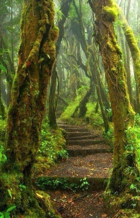 Return to Costa Rica in 2016. Rain Forest path; Costa Rica