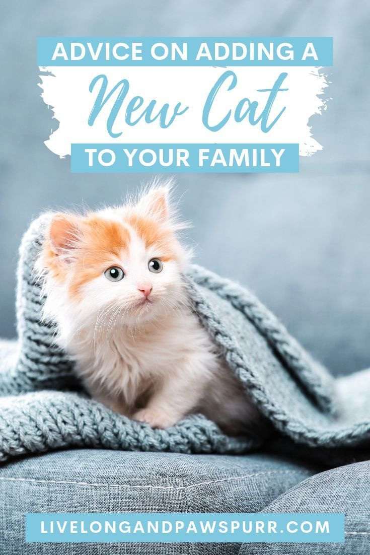 7 Helpful Tips For Introducing A New Kitten To Your Home Live Long And Pawspurr Kitten Adoption Cat Training Cat Advice