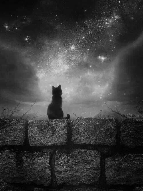 Gato olhando as estrelas. Gato, Céu, Noite Estrelada, imagem, desenho, figura.