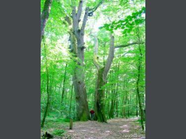 El bosque de Tronçais: Twins (© Jean Espirat) - France-Voyage.com