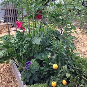 17 Best images about Growing Plants in Sacramento on