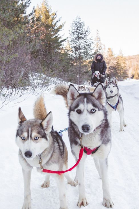 Where to go dog sledding in Ontario.