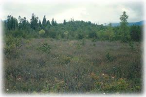 Pitt Polder - Ecological Reserve