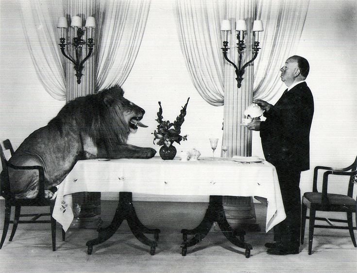Alfred Hitchcock serving tea to Leo the Lion (the mascotfor the Hollywood film studio MGM).