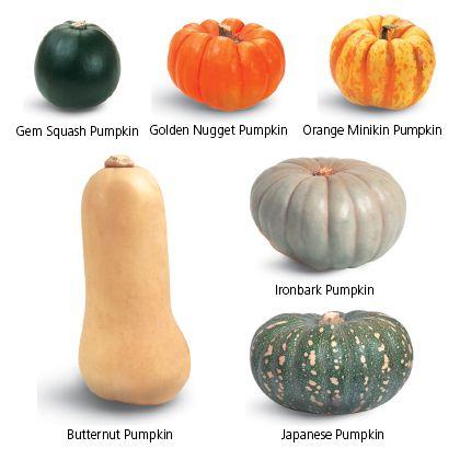Gem squash pumpkin, golden nugget pumpkin, orange minikin pumpkin, butternut pumpkin, ironbark pumpkin, Japanese pumpkin