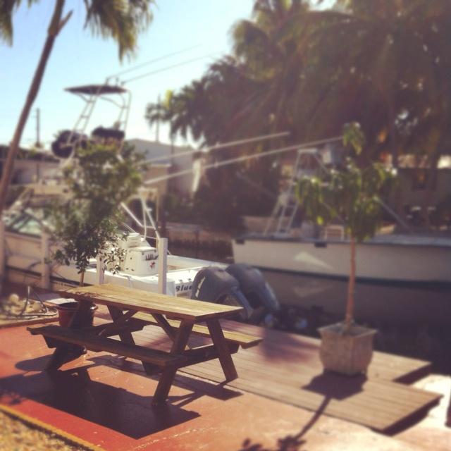 Back yard: Favorite Places, Back Yards, Keys Westtt