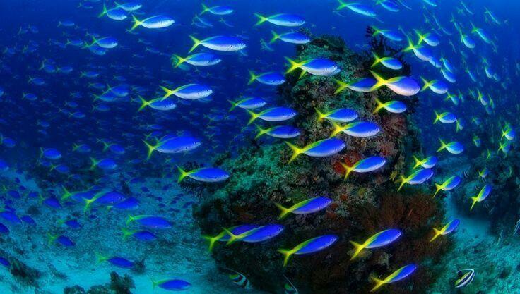 Colori sottomarini delle isole Raja Ampat, in Indonesia.