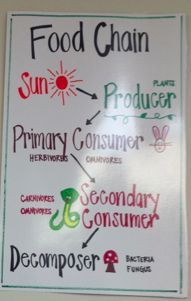 This is a great food chain anchor chart, that could easily be simplified for lower elementary.