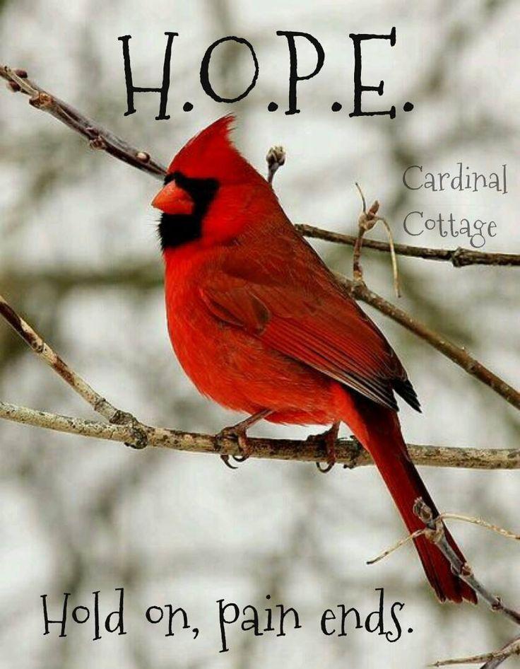 ♥ ~ ♥ Cardinals ♥ ~ ♥