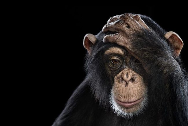 """Affinity"" ~ Incredible Close-up Studio Portraits of Wild Animals"