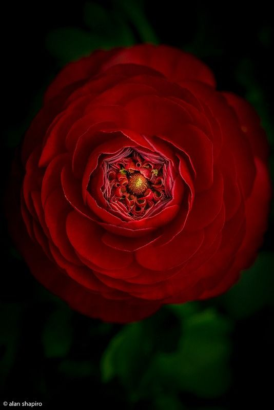 469 best flowers with black backgrounds images on
