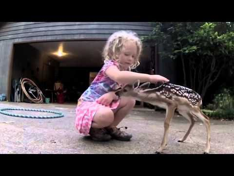 Baby Deer Walks Up To Little Girl. Her Reaction? Adorable - The Meta Picture