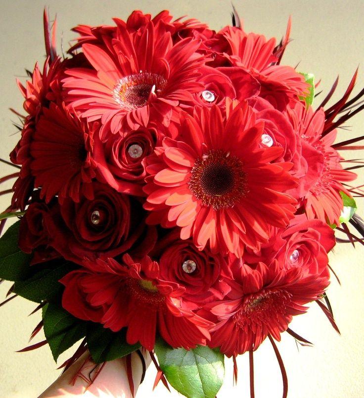 Red Gerbera Wedding Bouquets : Red gerbera daisy wedding decorations bridal bouquet
