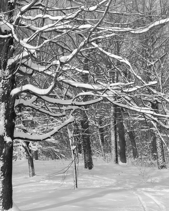 Quiet photograph of a deserted path in the middle of a snow covered forest. Winter scenery. Taken in Montreal, Quebec. Fine art print, Wall