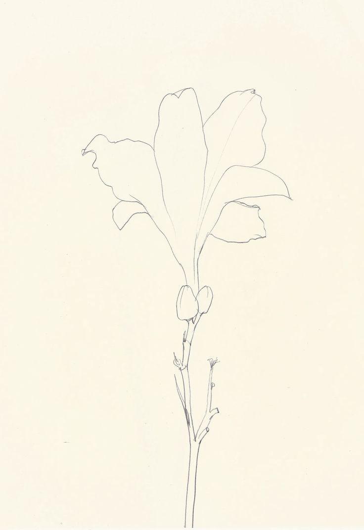 Ellsworth Kelly, Last Lily, 1986