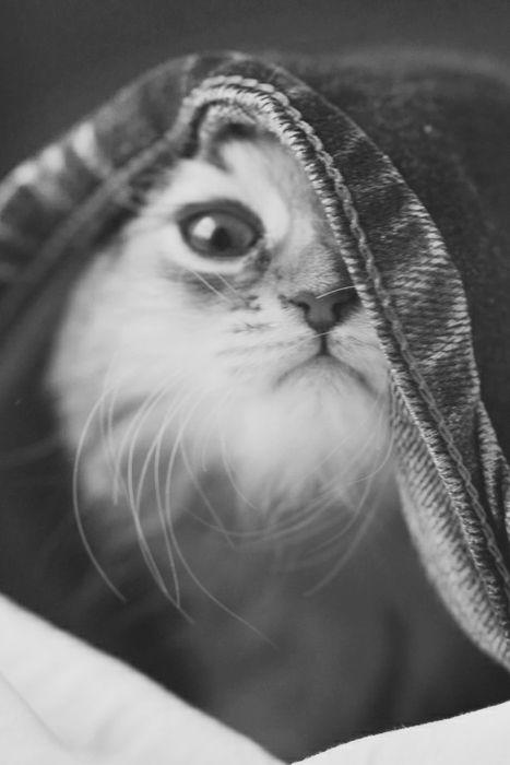 =========εїзp•w•nεїз=========Kitty Cats, Cat Photography, Catscatsand Morecat, Cute Cats, Hiding, Peek A Boos, Kittens, Fluffy Cat, Animal