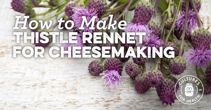 How To Make Thistle Rennet For Cheesemaking